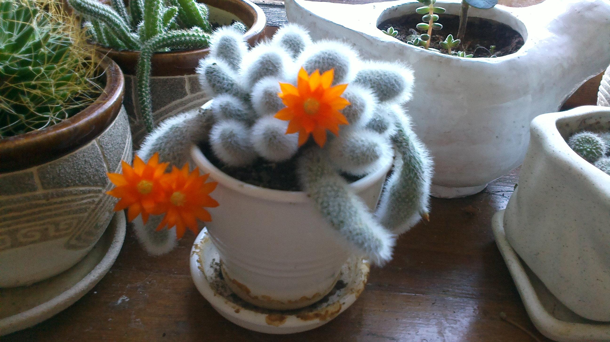купить кактус в нижнем новгороде